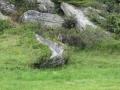 201208 Tures Aurina 163