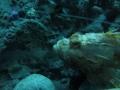 20130330 acquario GE 007