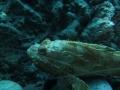 20130330 acquario GE 008