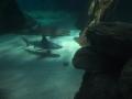 20130330 acquario GE 019