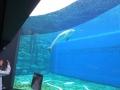 20130330 acquario GE 035
