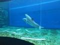 20130330 acquario GE 038