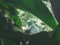 20130330 acquario GE 054