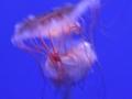 20130330 acquario GE 066