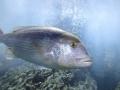 20130330 acquario GE 070